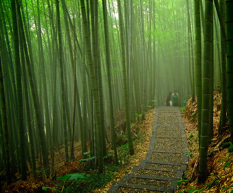 10 Simple Life Lessons From The Bamboo Ichi Go Ichi E