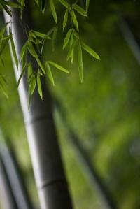 bambooi2