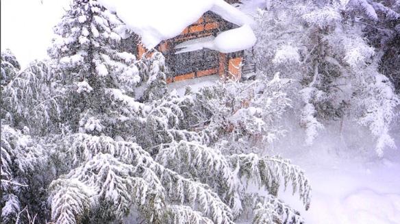 snow-bamboo